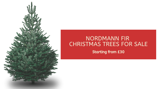 Nordmann Fir Christmas Trees for sale: Starting from £30